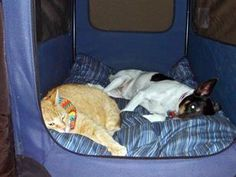 The dog and cat mourning the loss of a playmate (Kanadka via Reddit)