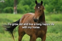 Equestrian Bucket List: Archive