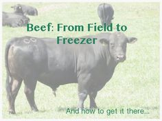 Everything you need to know about how to buy beef directly from a farmer.