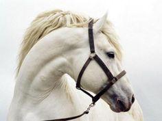 White Horse Anyone?