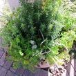 Herb Combinations for Container Gardens