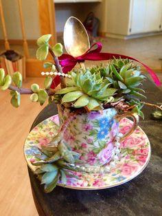 Tea cup succulent