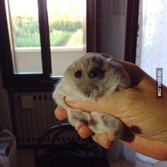 This hamster looks like a cartoon