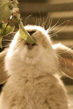 cute bunny~!