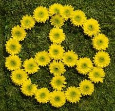 yellow flowers, peac sign, woodstock, ginger, peace signs, chains, daisies, la paz, garden