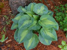 Sproutsandstuff: Propagate Hostas without Breaking Your Back!