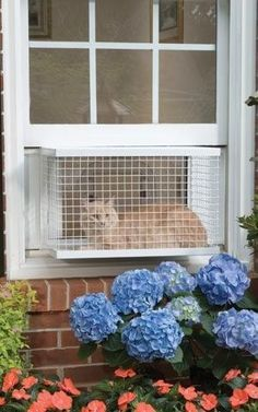 The Cat Veranda.   23 Insanely Clever Products Every Cat Owner Will Want