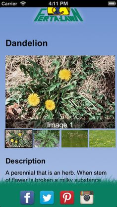 Weed ID App: identify lawn weeds in your yard with this free phone app by matching it up to pictures or send a picture of the weed and it will be identified for you