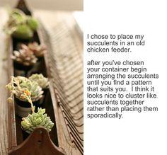 succulents in chicken feeder