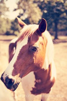 horse photography  brown and white horse by eireanneilis on Etsy