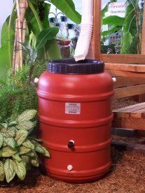 Got Rain?  Now shipping to Sara in MOUNTLAKE TERRACE, WA.... Great way  to capture a precious resource that we let run down the drain... Great for watering gardens... portable... transfers well from a small vehicle or pick up for hard to reach garden area's....53 Gallon Terra Cotta colored plastic rain barrel http://www.amazon.com/dp/B0039W0AUG/ref=cm_sw_r_pi_dp_Nvz-pb1YK711T