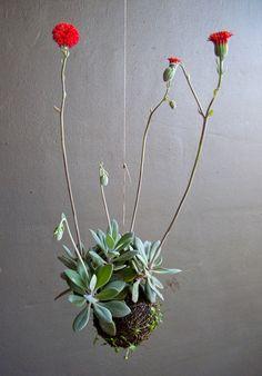 String Gardens by Fedor van der Valk via casasugar: Red Button flowers and succulents. #Gardens #String_Garden #Hanging_Plants