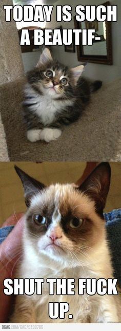 Grumpy Cat!(: