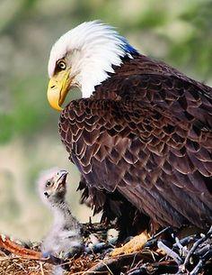 Eagle nest near the Amazing World beautiful amazing