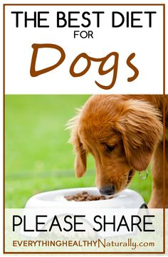 The Best Diet For Dogs