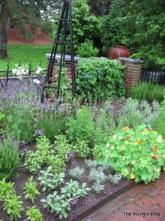Herbs in a kitchen garden#grow your own#herbs#cooking