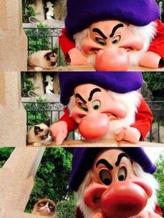 Grumpy Cat meets Grumpy