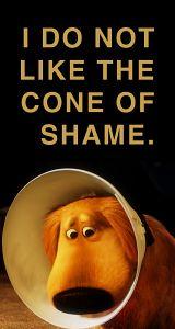 film, disney movies, shame, 300 movie quotes, cutest dogs, funni, pixar, dug, cone