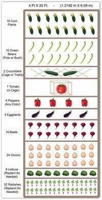 Raised Bed Garden Vegetable Layout