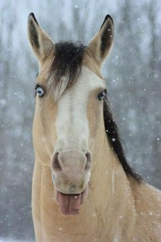 Catching snowflakes ~