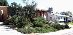 A San Diego garden featuring California native plants. Plants include Coast Live Oak, Toyon, Western Red Bud, J. Dourley Manzanita, Deergras...