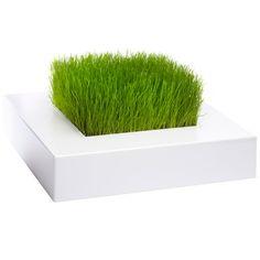 Lawn in a box