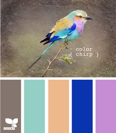 Fowl : color chirp