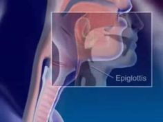 Respiratory System Animation…for older students