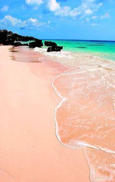 pink sand beach. bermuda.