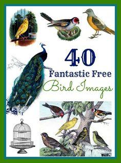 Best Free Bird Images