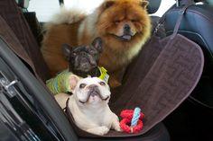 Francesca, Sharkey, and GK rest comfortably on the Martha Stewart Pets Travel Hammock during car rides #marthastewartpets #petsmart