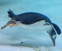 penguin videos and facts