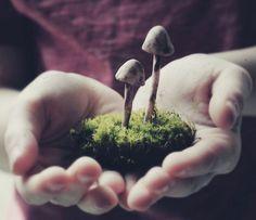 forests, hand, autumn garden, magic, green