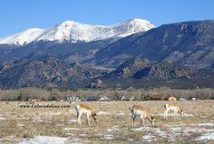Buffalo Peaks, CO