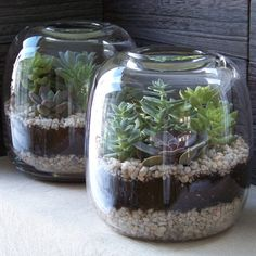 Succulent terrariums. Be sure to use cactus soil or even that mixed with sand for good drainage.