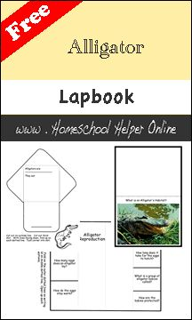 Free Alligator Lapbook - Homeschool Helper Online
