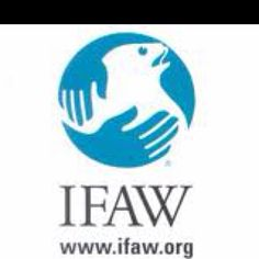 IFAW (the International Fund for Animal Welfare) saves individual animals, animal populations and habitats all over the world. With projects in more than 40 countries, IFAW provides hands-on assistance to animals in need, whether it's dogs and cats, wildlife and livestock, or rescuing animals in the wake of disasters. http://www.ifaw.org/us/
