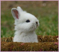 bunny too
