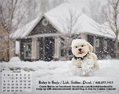 January's 2013 Digital Calendar FREE download! Scroll to the bottom and while you're there upload a pic of your dog for 2013 Dog-A-Day (all fan submitted!)