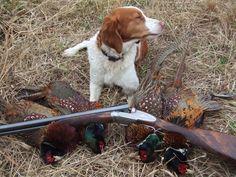beretta trident upland bird hunting   Upland Journal: An Online Magazine Devoted to the Upland Bird Hunting ...