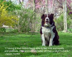 25 Inspiring Quotes For People Who Love Animals