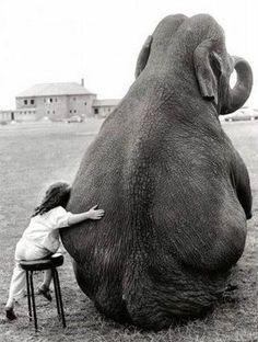 elephants, animals, dreams, pet, children