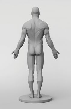 3dtotal Anatomy: male planar figure