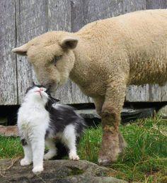 Fuzzy friends.
