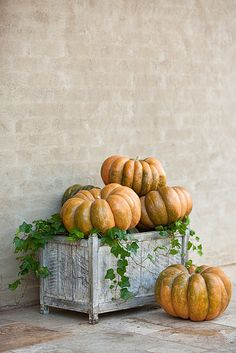 Autumn Splendor....Love the color and shape of these pumpkins.
