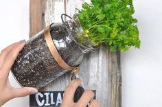 ason jar DIY hanging herb garden indoor plants