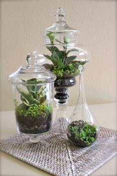 decor, plant, idea, apothecary jars, glass containers, terrarium galor, diy, garden, apothecari jar