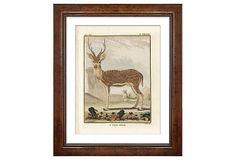 Georges-Louis Leclerc, Deer on OneKingsLane.com