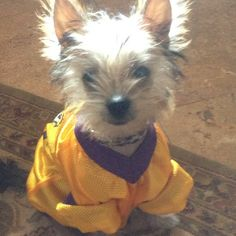 Ready for the game! #LSU