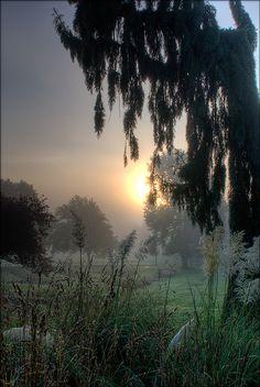 Sunrise in morning mist, Beacon Hill Park, BC, Canada